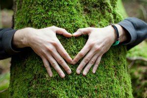 slider-4-arbre-coeur